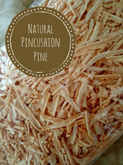 Natural Pincushion Pine